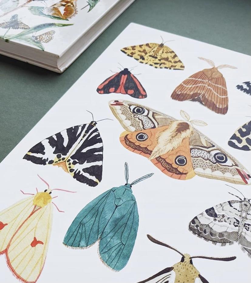An illustration ofa number of moths